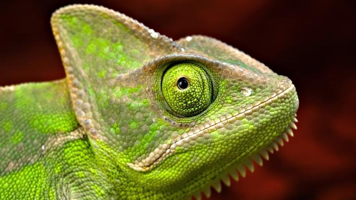 639_kameleon_zielony.jpg